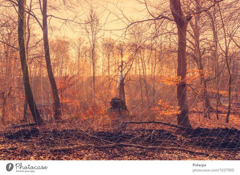 Aufgehende Sonne im Wald mit Sonnenstrahlen im Nebel schön Sommer Umwelt Natur Landschaft Herbst Baum Blatt Park Straße hell grün Waldlichtung magisch Märchen
