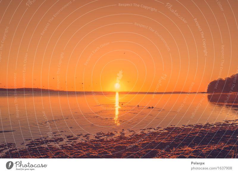 Sonnenaufgang an einem See mit Wildenten schön Sommer Meer Spiegel Natur Landschaft Himmel Wolken Horizont Küste Fluss Skyline Vogel blau gelb gold rot Farbe