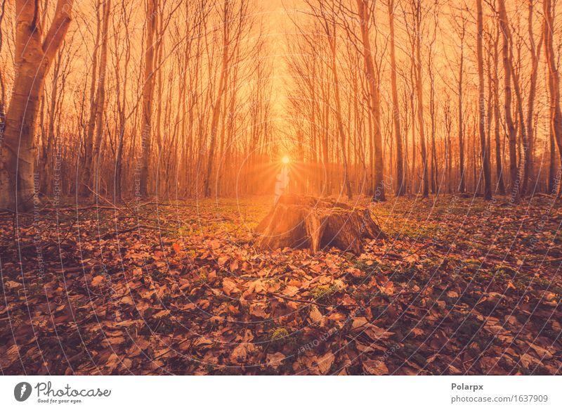 Märchen Sonnenaufgang in einem Wald mit einem Baumstumpf schön Sommer Umwelt Natur Landschaft Herbst Nebel Blatt Park Straße hell grün Waldlichtung magisch