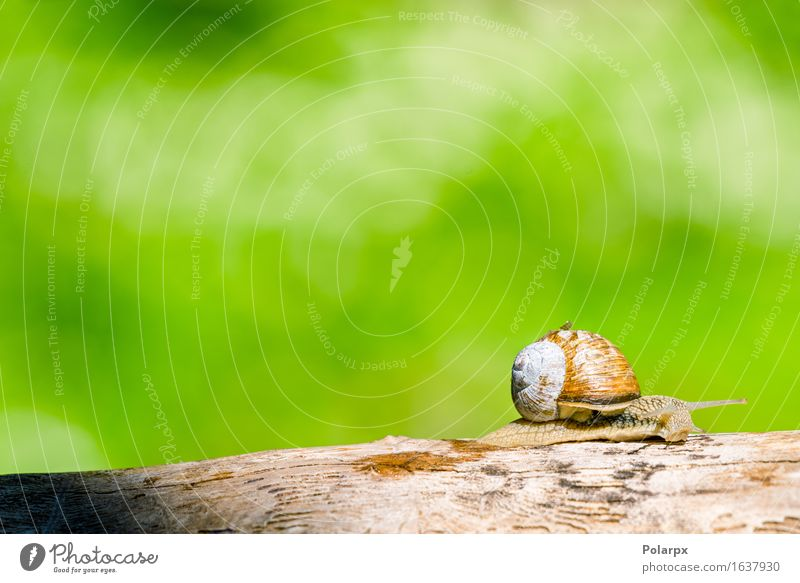 Schnecke in einem Wald am Frühjahr, das in eine hölzerne Niederlassung kriecht Natur schön grün Sommer weiß Baum Haus Tier Umwelt Wärme Leben klein Stein braun