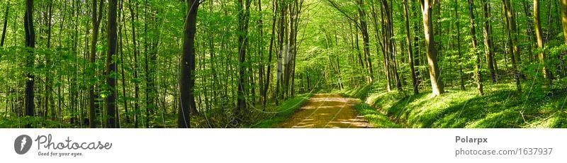 Straße in einer grünen Waldpanoramalandschaft im Frühjahr Sommer Sonne Umwelt Natur Landschaft Pflanze Frühling Baum Blatt Park hell natürlich wild Gelassenheit