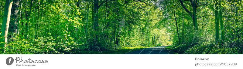 Wald in den grünen Farben mit einer Straße im Frühjahr Natur Pflanze Sommer Sonne Baum Landschaft Blatt Umwelt Frühling natürlich hell Park wild