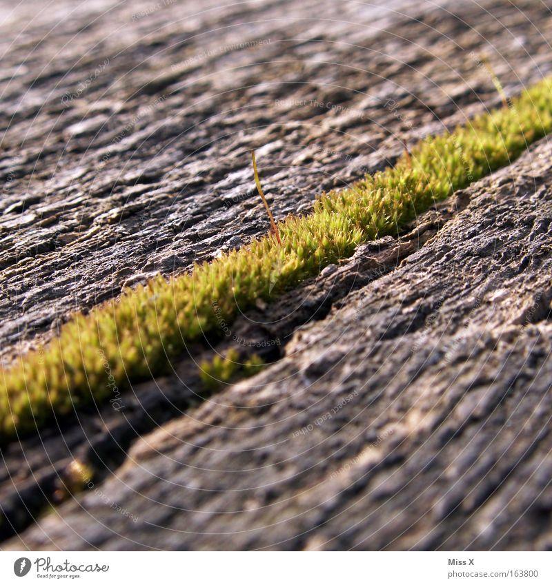 Der Weg zum Moos Holz Wachstum verfaulen diagonal Moos Sumpf Moor Feuchtgebiete