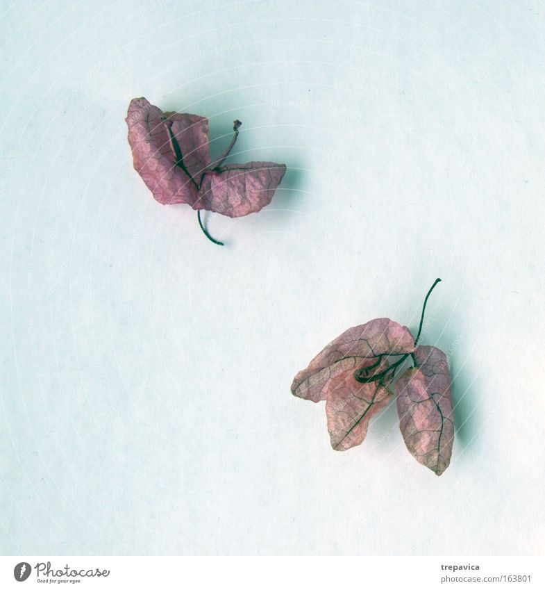 bluemchen schön Pflanze ruhig Erholung Gefühle Traurigkeit Stimmung elegant Trauer Appetit & Hunger Müdigkeit Duft Spa Endzeitstimmung