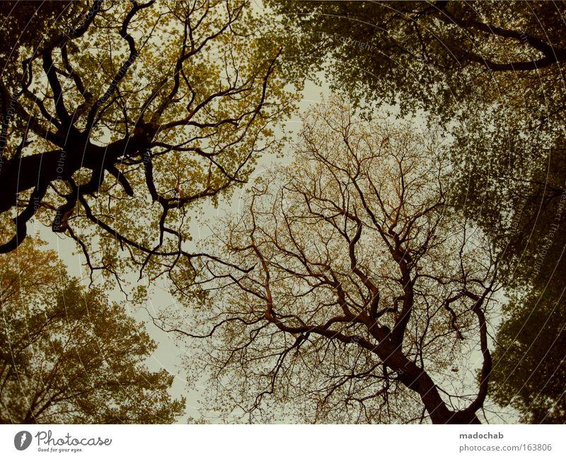 Ein Königreich für eine Baumkrone Farbfoto Gedeckte Farben Menschenleer Dämmerung Froschperspektive Weitwinkel Umwelt Natur Pflanze Herbst Blatt Wald
