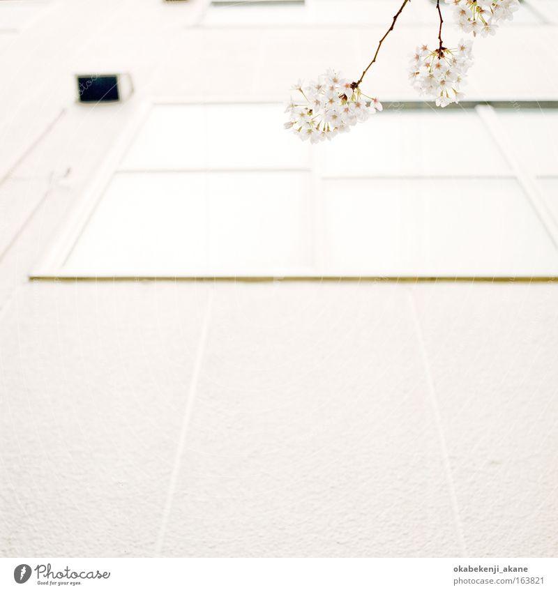 Sakura #9 Farbfoto Tag Licht Blick nach oben Luft Baum Blume Tokyo Japan Asiate Asien Gelassenheit
