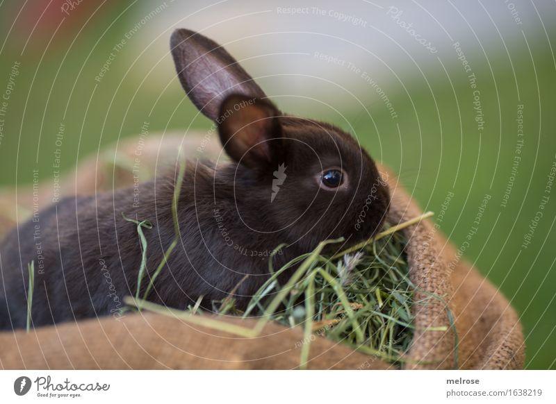 snifffffffffff grün Sommer Erholung Tier schwarz Tierjunges Wiese Gras klein Garten braun genießen niedlich weich Neugier Ostern