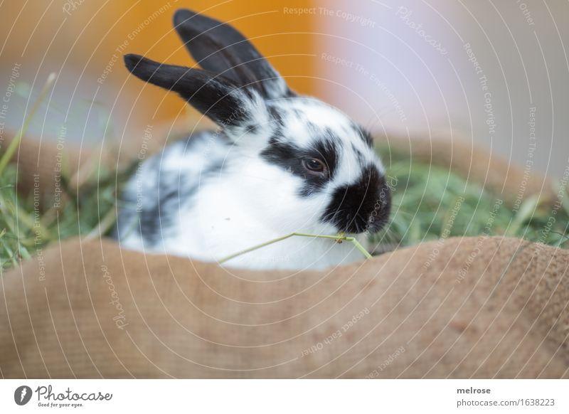 Hase im Strohjuttesack schön weiß Erholung Tier schwarz Tierjunges klein braun orange Zufriedenheit genießen niedlich weich Neugier Ostern Fell