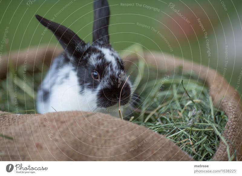 bin sooo traurig ... grün weiß Erholung Tier schwarz Tierjunges Wiese Gras klein braun Zufriedenheit genießen niedlich weich Pause Neugier