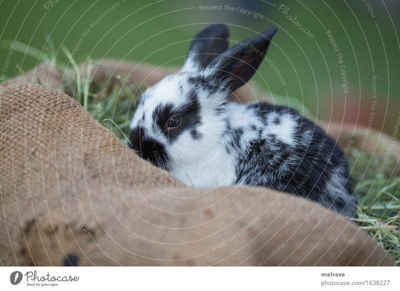bin sooo schüchtern grün schön weiß Erholung Tier schwarz Tierjunges Wiese klein Garten braun Zufriedenheit genießen niedlich weich Freundlichkeit
