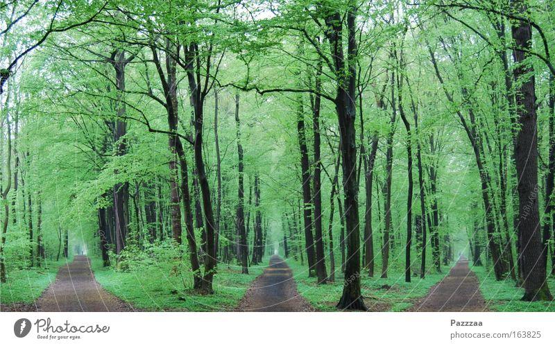 Mist, verlaufen. Natur Baum Pflanze Wald Frühling Wege & Pfade Landschaft wandern entdecken Zeit Wegkreuzung gleich Entscheidung orientierungslos