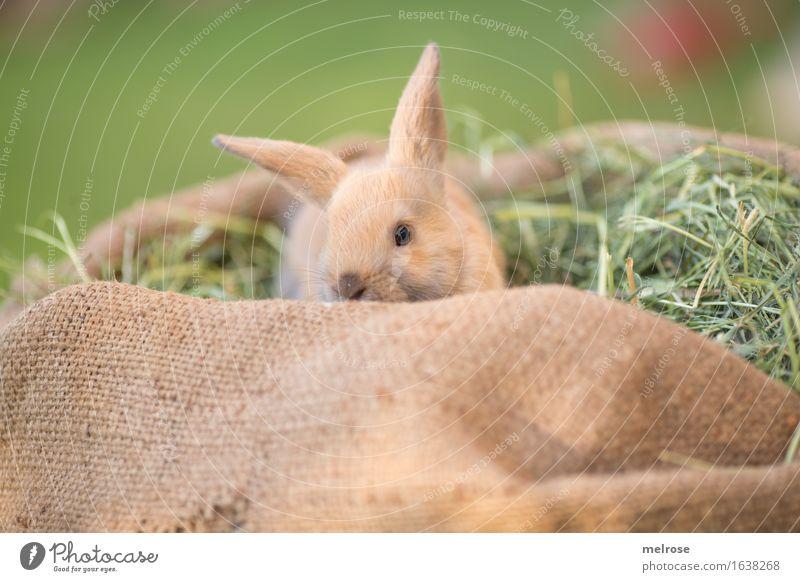 Guckuck ... grün Erholung Tier Tierjunges klein Garten braun Zufriedenheit liegen genießen niedlich weich Freundlichkeit nah Fell Haustier