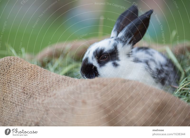 Schlaft gut! grün weiß Erholung Tier schwarz Wiese Gras klein Garten braun Zufriedenheit genießen beobachten niedlich weich Neugier