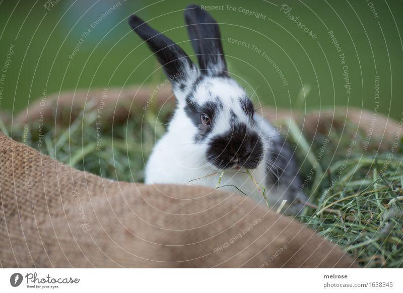 Langeweile seufz ... grün weiß Erholung Tier schwarz Tierjunges klein Garten braun Zufriedenheit warten genießen niedlich weich Neugier Ostern