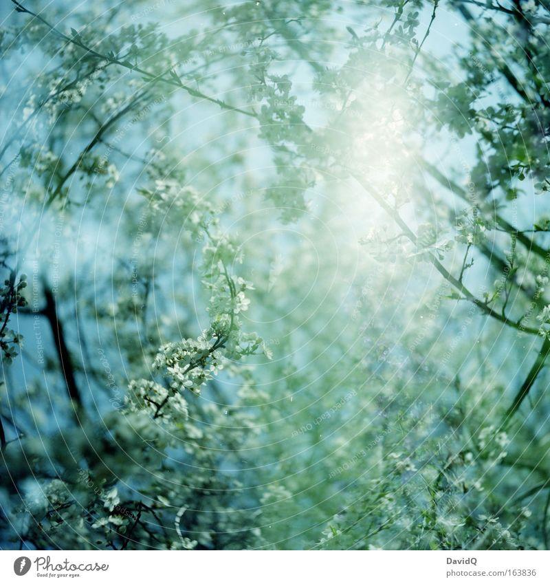 I am a deep sea diver Natur Himmel weiß Baum blau Pflanze Blatt Leben Blüte Frühling Freiheit Glück träumen frisch Wachstum Freundlichkeit