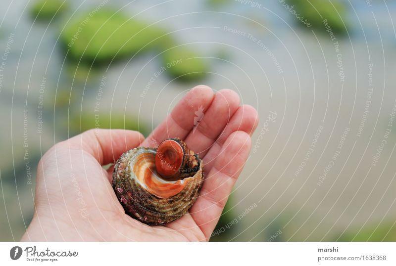 Strandbewohner Meer Tier Sand Schnecke finden Portugal Ekel Muschel Algarve Bewohner