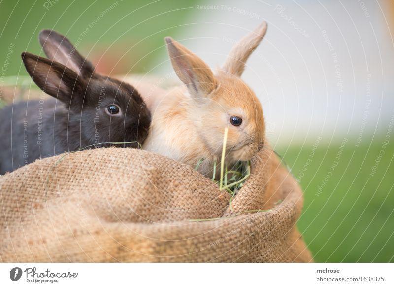 ICH und mein Buddy ... grün weiß Erholung Tier schwarz Tierjunges Wiese klein Garten braun liegen genießen niedlich weich Freundlichkeit Neugier