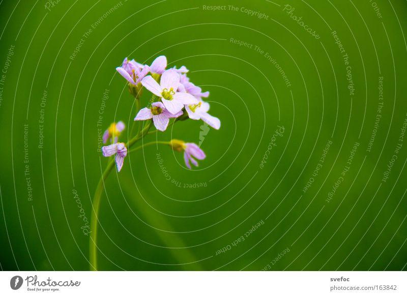 Erstlingsfrucht Farbfoto Makroaufnahme Menschenleer Textfreiraum rechts Hintergrund neutral Schwache Tiefenschärfe Zentralperspektive Natur Pflanze Frühling