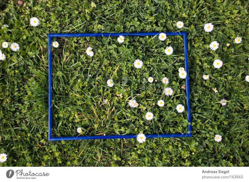 [Harusaki|DD] Den Rahmen sprengen Natur weiß grün blau Pflanze Erholung Wiese Gras Frühling Park frisch Dresden Gänseblümchen Blume Geborgenheit Rahmen