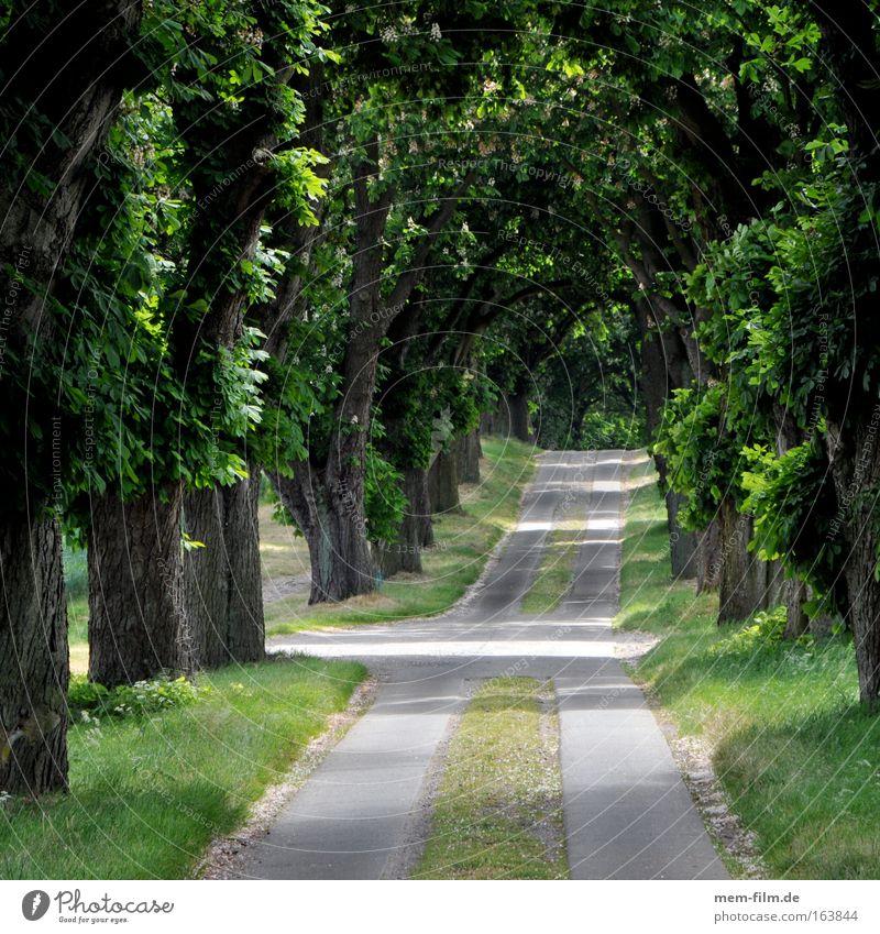 los jetzt! Natur Baum Blume grün Pflanze Blatt Straße Wege & Pfade Landschaft Luft Umwelt Erde Klima Urelemente Allee Straßenkreuzung
