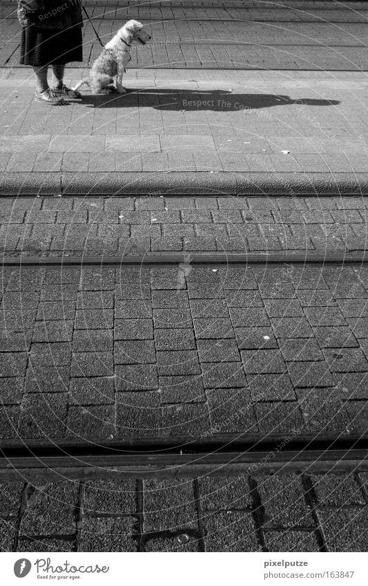 Verspätung Schwarzweißfoto Außenaufnahme Textfreiraum unten Tag Weiblicher Senior Frau 60 und älter Verkehr Bahnfahren Fußgänger Schienenverkehr Hund 1 Tier alt