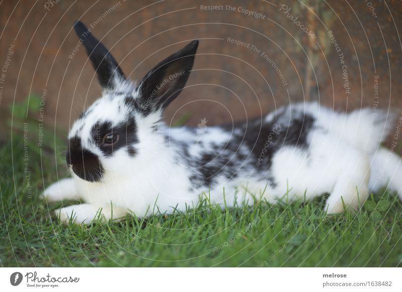 ab ins Wochenende ... grün weiß Erholung Tier schwarz Tierjunges Frühling Wiese Gras klein braun Zufriedenheit liegen genießen einfach niedlich