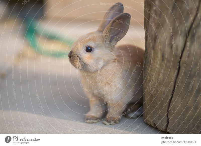 habt ihr schon genug von MIR ? schön Erholung Tier Tierjunges Stil klein Garten grau braun Zufriedenheit elegant warten niedlich weich Pause Ostern
