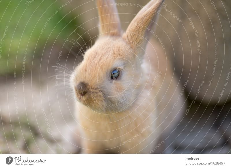 aufgewecktes Kerlchen grün schön Erholung Tier Tierjunges Wiese klein Garten braun Zufriedenheit sitzen genießen niedlich weich Freundlichkeit Neugier