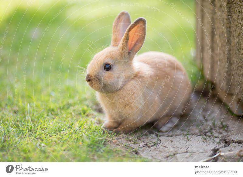 so a liabs Gschau ... grün Erholung Tier Tierjunges Wiese Gras klein Garten grau braun hell Zufriedenheit genießen Schönes Wetter niedlich weich