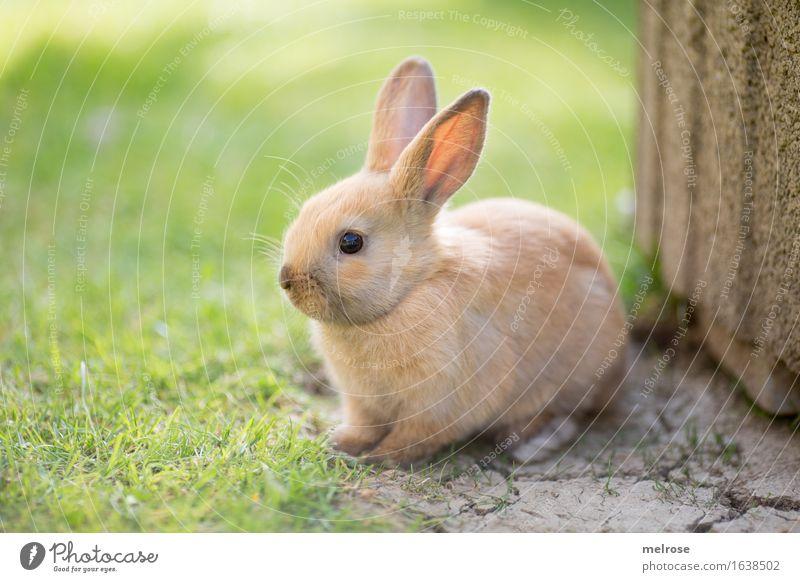 Hübschling ... grün Erholung Tier Tierjunges Gras klein Garten grau braun Zufriedenheit sitzen niedlich weich Freundlichkeit Pause Neugier