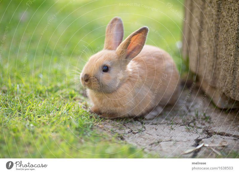 WARTEN auf das WE grün Erholung Tier Tierjunges Wiese Gras klein Garten grau braun sitzen genießen niedlich weich Neugier Ostern