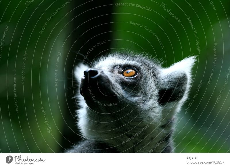 hilfe kommt grün ruhig Tier grau träumen warten Hoffnung Zukunft weich Tiergesicht Vertrauen Sehnsucht Fell Zoo niedlich exotisch