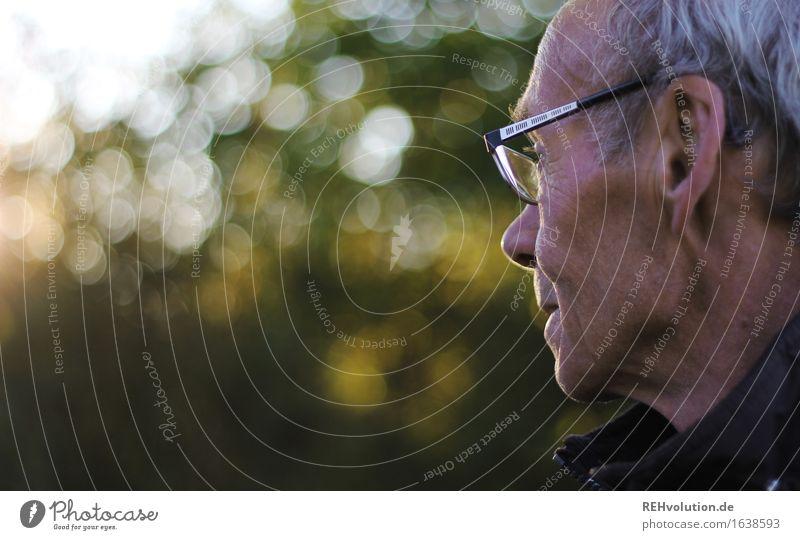 Senior im Profil mit Brille Mensch maskulin Mann Erwachsene Männlicher Senior 1 60 und älter Umwelt Natur Landschaft Baum Park grauhaarig beobachten alt