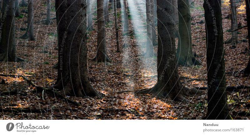 Hänsels Pfad Natur Baum Pflanze ruhig Einsamkeit Wald Erholung Herbst Umwelt Stimmung braun Erde Nebel wandern Urelemente Unendlichkeit