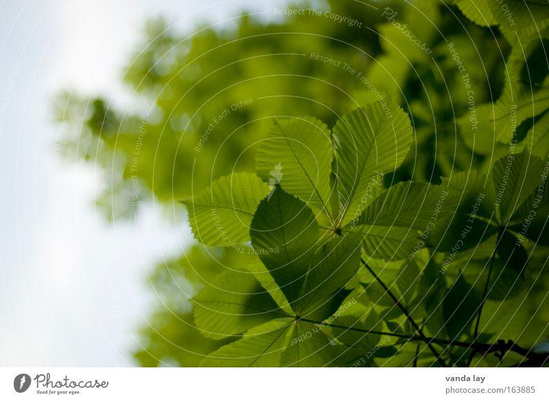 Biergartenzeit Himmel Natur Baum Pflanze Sommer Blatt Erholung Umwelt Frühling München wandern Blühend Gastronomie Tradition Umweltschutz Bayern