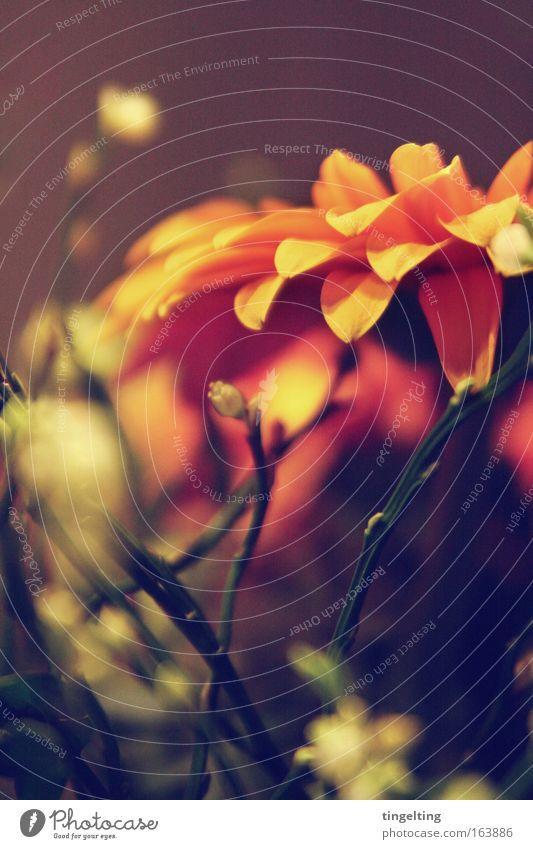 bouquet de fleurs Gedeckte Farben mehrfarbig Innenaufnahme Makroaufnahme Menschenleer Textfreiraum oben Kunstlicht Schatten Schwache Tiefenschärfe