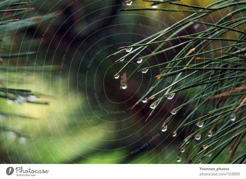 Tränen der Natur Wasser grün Baum Pflanze Umwelt kalt Herbst Frühling Park Regen Wetter glänzend natürlich nass Wachstum