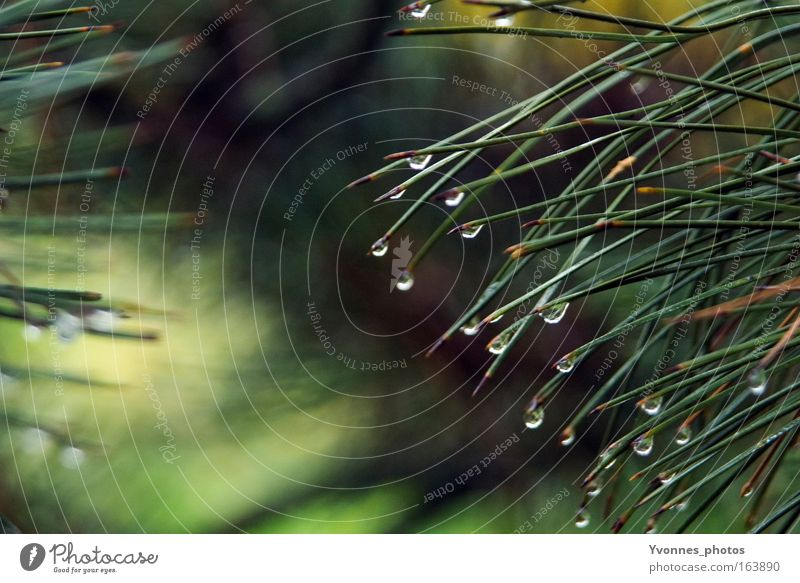 Tränen der Natur Natur Wasser grün Baum Pflanze Umwelt kalt Herbst Frühling Park Regen Wetter glänzend natürlich nass Wachstum