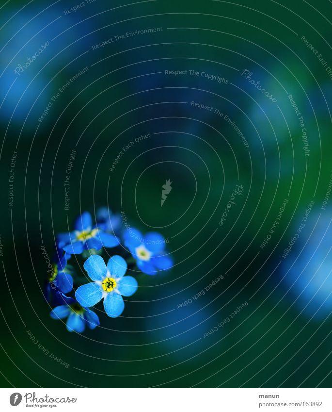 .. da war doch was...? Valentinstag Gartenarbeit Gärtnerei Floristik Pflanze Frühling Blume Blüte Vergißmeinnicht Park Zeichen Fröhlichkeit frisch blau grün