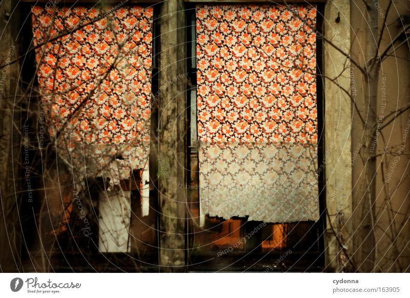 [DD|Apr|09] Detailverliebt Pflanze Einsamkeit Haus ruhig Leben Fenster Architektur Angst ästhetisch kaputt Wandel & Veränderung retro einzigartig