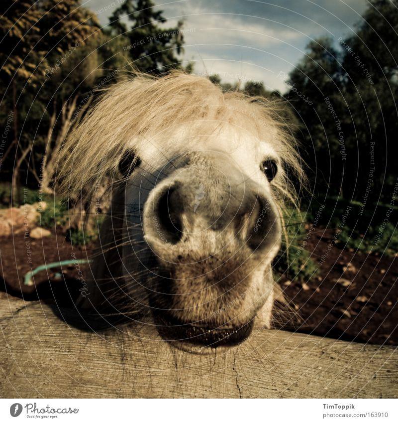 Animal Farm #1 Natur weiß grün Pflanze schwarz Tier Landschaft Zufriedenheit braun Feld Umwelt verrückt Pferd Fröhlichkeit stehen nah