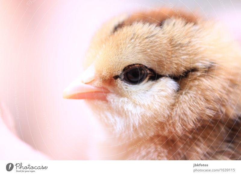 sweetheart Natur schön Erotik Tier Tierjunges Umwelt natürlich feminin Glück außergewöhnlich Lebensmittel Vogel elegant Wildtier Ernährung süß