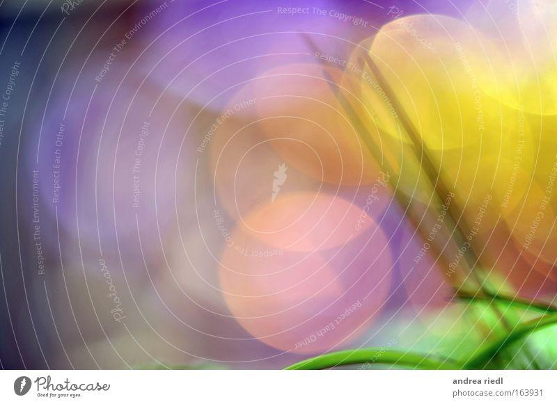 Farbenundetwasgrün grün blau Pflanze gelb Stil Gras Glück hell rosa frisch Fröhlichkeit abstrakt rund violett Blühend Freundlichkeit