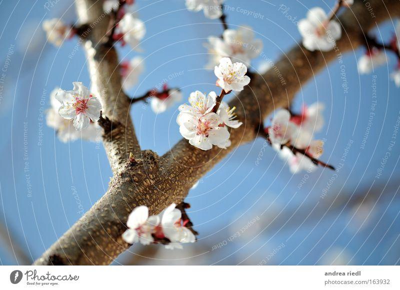 Urgarns Beste Natur Himmel weiß Baum Blume blau Pflanze Blüte Frühling Park Landschaft braun Kraft Gesundheit rosa Lebensmittel