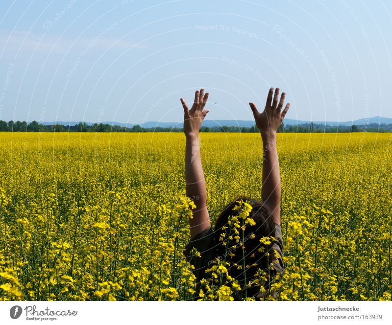 Guten Morgen Sommer Kind Natur Jugendliche Hand grün Pflanze Freude Erholung gelb Leben Junge Glück Kopf Feld Arme
