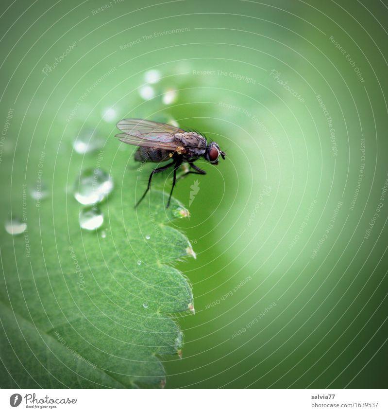 Regenpause Natur Pflanze grün Blatt Tier Leben Regen Fliege sitzen warten Flügel Wassertropfen einzigartig Ecke Insekt Leichtigkeit