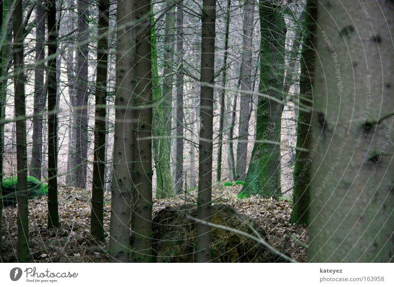 Es war einmal ... Natur Baum Wald Erholung Landschaft Stein Erde Angst Freizeit & Hobby wandern Moos schlechtes Wetter Märchenwald