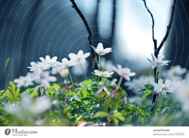 Märchenwald Nahaufnahme Textfreiraum oben Tag Sonnenlicht Gegenlicht Froschperspektive Natur Pflanze Frühling Schönes Wetter Blume Blüte Wildpflanze Park