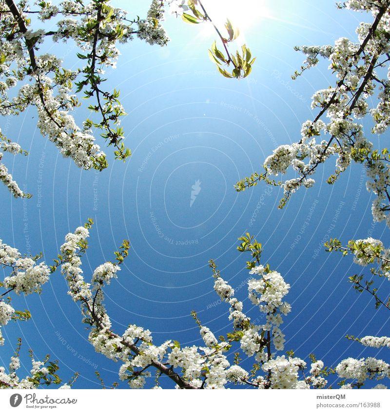 Japanese Spring Farbfoto Außenaufnahme Menschenleer Hintergrund neutral Tag Sonnenlicht Froschperspektive Fischauge schön Gesundheit Leben ruhig Duft Sommer