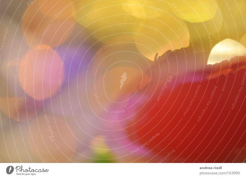 PapermoonII Natur weiß grün blau Pflanze rot Sommer gelb Wiese Frühling rosa gold verrückt violett einzigartig außergewöhnlich